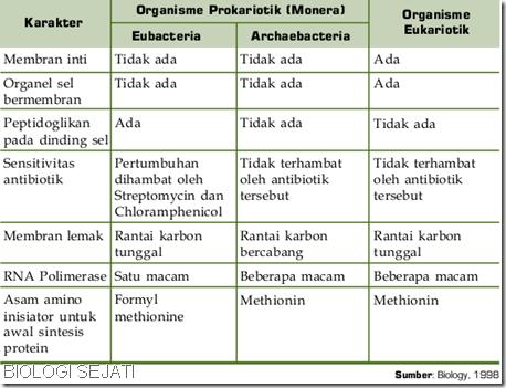 Perbedaan_archaebacteria_eubactyeria
