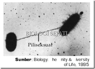Philli_sex_bakteri