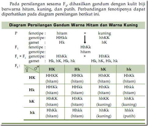 Ellen d prastiwi november 2012 dari diagram tersebut dapat kita peroleh perbandingan fenotipenya yaitu 12 hitam 3 kuning 1 putih ccuart Image collections